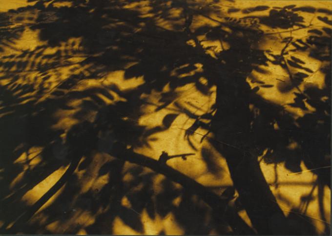 Leaf's shadow – Bóng lá – 2005