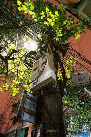 Vinatree – Cây Việt Nam – 2007